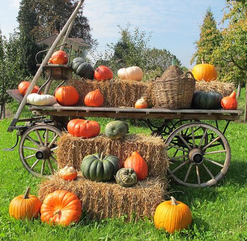 Pumpkin Wagon cool pumpkin facts