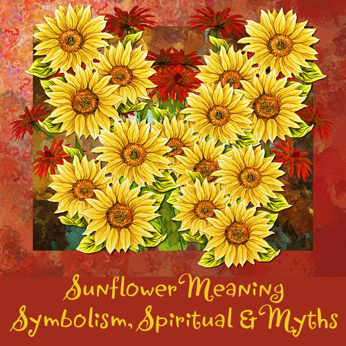 What Is The Meaning Of A Sunflower Symbolism Spiritual And Myths