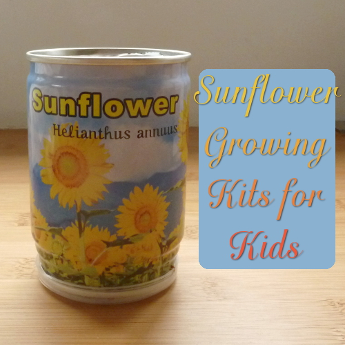 Sunflower growing kit instructions starter seeds