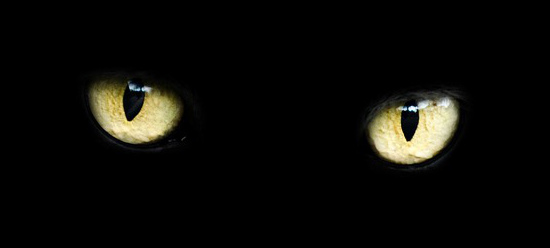 black cat Eyes yellow
