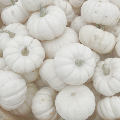 Mini pumpkins white