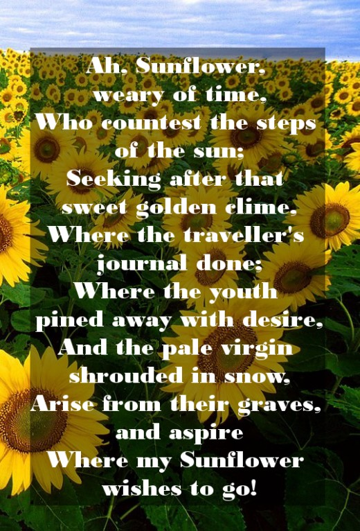 The Sunflower by William Blake