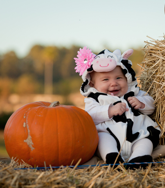 baby cow costumes for halloween infant girl in cow print outfit next to pumpkin