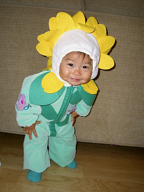 toddler child dressed in a sun flower costume jumpsuit with petal hood sunflowers