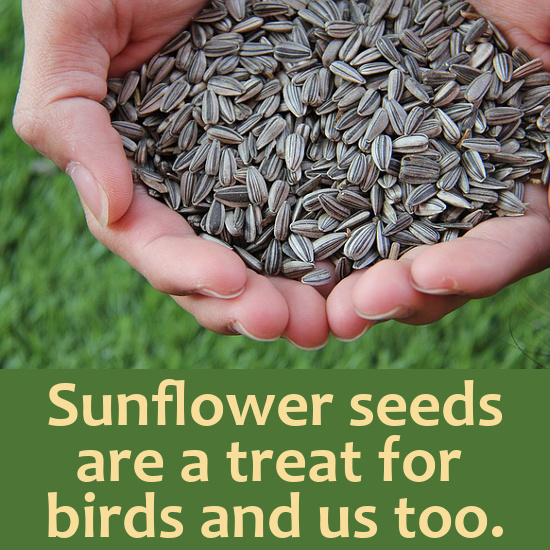 Sunflower seeds held in the hand
