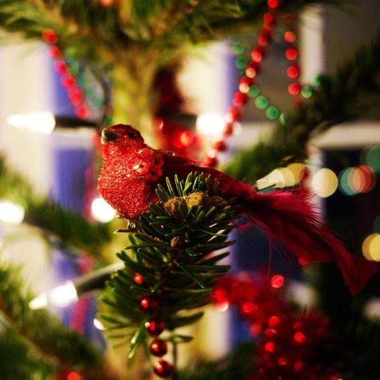 Robin bird ornament on a decorated Christmas tree