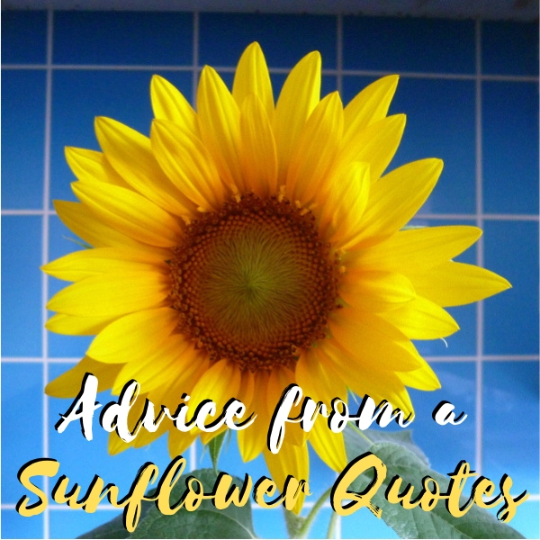Advice from a Sunflower Quotes Quotations Sayings Sentiments Being a Friend and Attracting Friendships