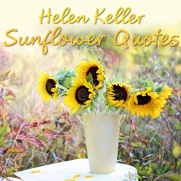 Helen Keller Sunflower Quotes and Meaning Quotations Sentiments Sun Flower Sunflowers Yellow Flower Quote
